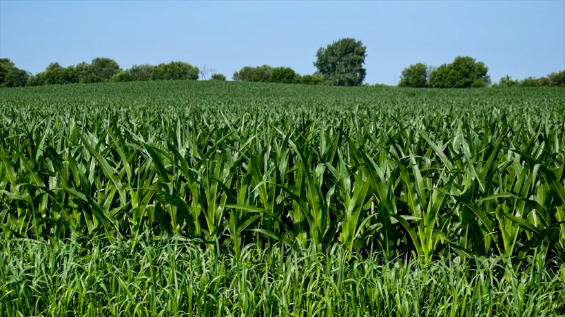 Lincoln Highway Corn Fields