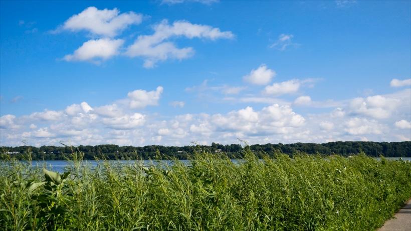 Presque Isle Grass