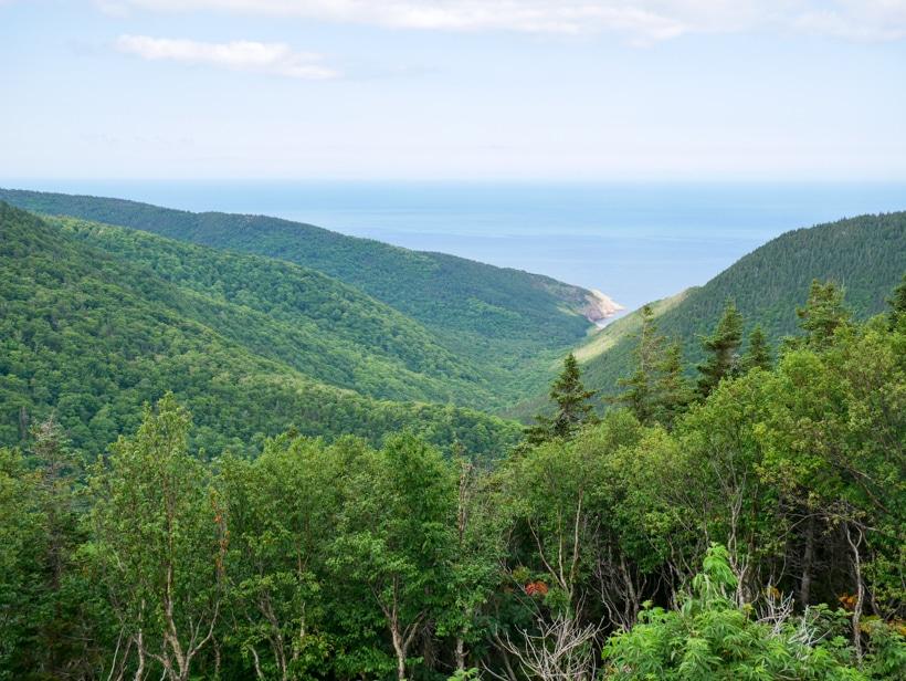 Cape Breton Island Trees 2