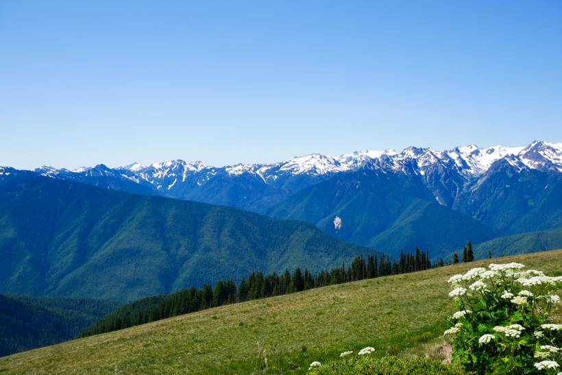 Hurricane Ridge at the top