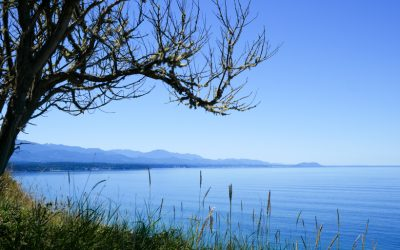 Olympic Peninsula Road Trip and Stealth Van Camping | Part I