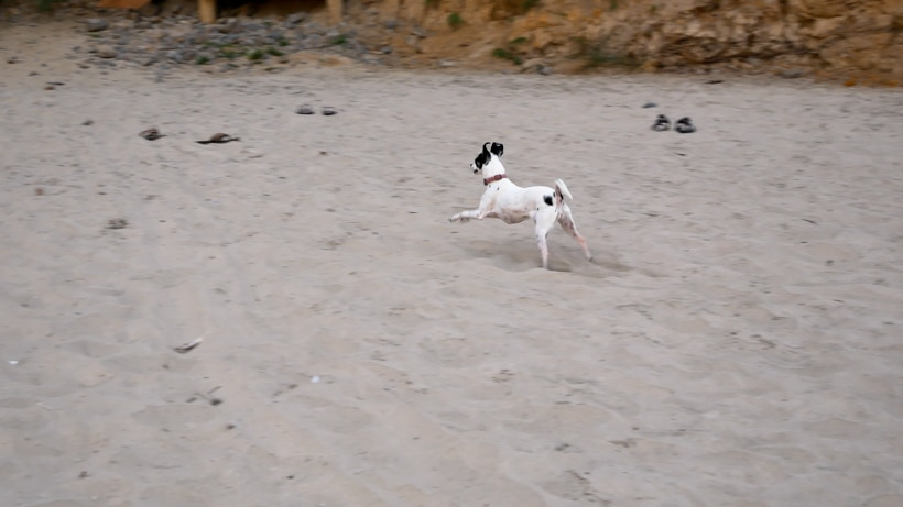 Lily Running on Arcadia Beach 3